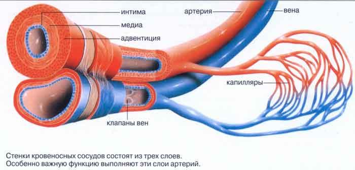 sosudy-445