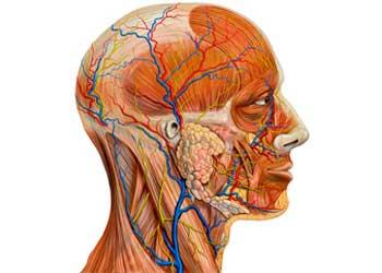 m sosudy golovnogo mozga - Como verificar os vasos do cérebro e do pescoço