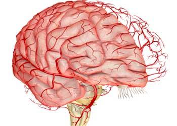 Чем можно расширить сосуды головного мозга?