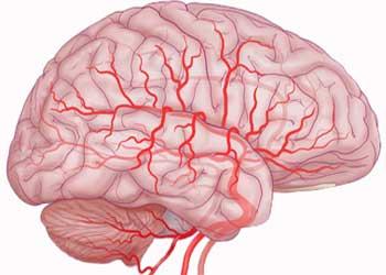 Что пить для чистки и укрепления сосудов — 12 напитков, которые повышают эластичность артерий и улучшают кровообращение головного мозга