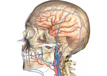 Доплерографическое исследование сосудов головного мозга, УЗДГ головы и шеи