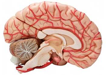 Упражнения для улучшения мозгового кровообращения
