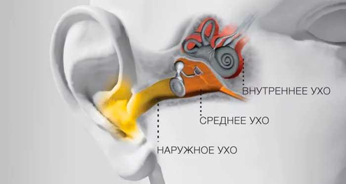 Анатомически ухо делится на три части: наружное, среднее и внутреннее ухо