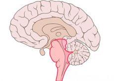 Симптомы и прогноз опухоли ствола головного мозга
